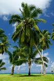 Palm tree. On a background of the sea Royalty Free Stock Photo