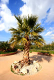 Palm Tree Stock Images