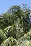 Palm tree. Palm Stock Image