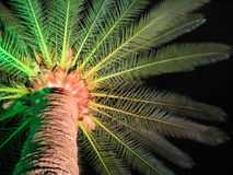 Palm tree. A shot on night to a palm tree Royalty Free Stock Image