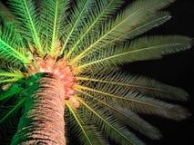 palm tree στοκ εικόνα με δικαίωμα ελεύθερης χρήσης