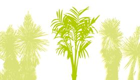 Palm tree. Abstract palm tree royalty free illustration