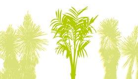 Palm tree. Abstract palm tree Royalty Free Stock Photo