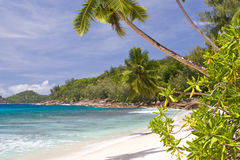 Palm tree. On the beach of the Mahe island Stock Images