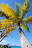 Palm Tree. Beautiful palm tree Royalty Free Stock Photo