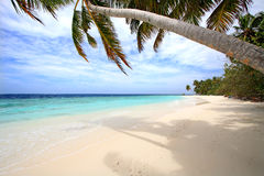 Palm tree. S on exotic beach Stock Image