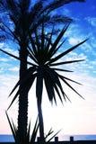 Palm-tree Royalty Free Stock Image