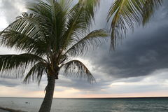 Palm tree. A romantic sunset in Varadero at Cuba Stock Photography