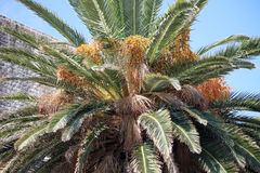 Free Palm Tree Stock Images - 59101444
