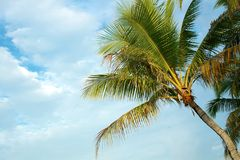 Palm tree. On sky background Stock Image