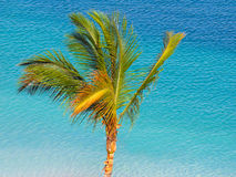 Free Palm Tree Stock Images - 63221354