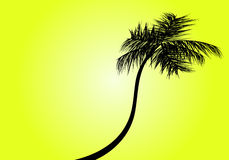 Palm tree. Abstract vector illustration Royalty Free Stock Photo