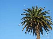 Palm-tree. Moon and a flock of seagulls stock image