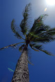 Palm tree. A palm tree under the sun in hawaii stock images