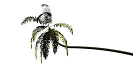 Palm tree. Isolated coconut palm tree on white background Royalty Free Stock Images