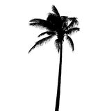 Palm tree. Silhouette with clipping path isolated on white royalty free stock images