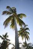 Palm tree. And sun in the evening Stock Photos