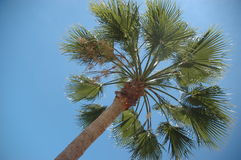 Palm Tree. Nice Palm Tree Royalty Free Stock Photos