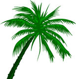Palm Tree. Vector illustration of a tropical palm tree Stock Images