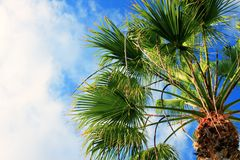 Free Palm Tree Stock Photography - 8315742