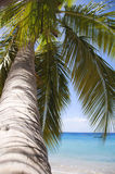 Palm tree. Close up of a palm tree Royalty Free Stock Photos