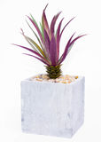 Palm tree2 Stock Afbeeldingen