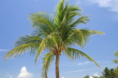 Palm Tree Royalty Free Stock Photos