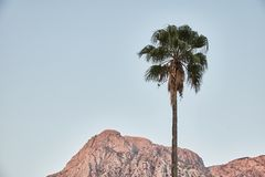 The palm tree above the mountains. To. Montenegro. royalty free stock photos