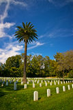 Palm Tree above the National Cemetery Stock Photos