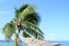 Palm tree above sea royalty free stock photography