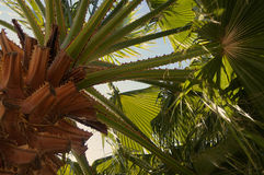 Palm tree from above Royalty Free Stock Photography