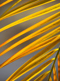 Palm tree. Abstract detail of colorful palm tree Stock Photography