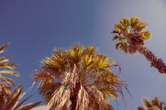 Palm tree against the background of summer sky Royalty Free Stock Image