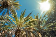Palm tree against the background of summer sky Royalty Free Stock Photos