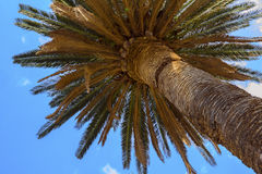 Palm tree. Stock Photography