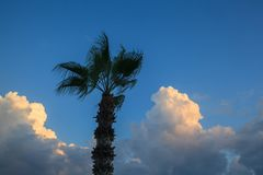 Palm tree against the beautiful blue sky with clouds. stock images