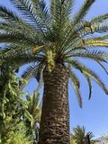 Palm tree against a blue Mediterranean sky Royalty Free Stock Photos