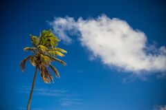 Palm tree against blue skies Royalty Free Stock Images