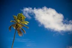 Palm tree against blue skies