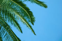 Palm tree against blue sky Royalty Free Stock Image