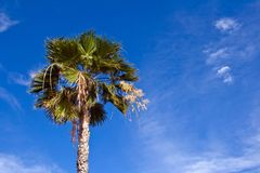 Palm tree against blue sky Royalty Free Stock Photo