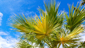 Palm tree against blue sky background stock photos