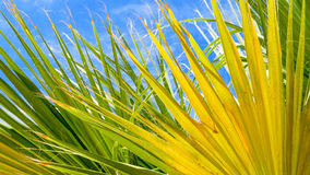 Palm tree against blue sky background royalty free stock photo