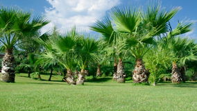 Palm tree against a blue sky. Beauty palm-trees in Antalya, Turkey stock video footage