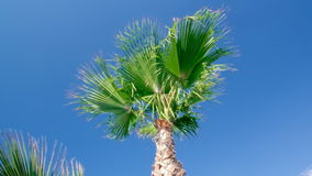 Palm tree against a blue sky. Beauty palm-trees in Antalya, Turkey stock footage