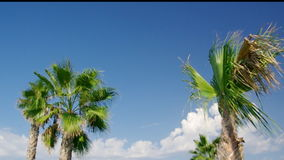 Palm tree against a blue sky. Beauty palm-trees in Antalya, Turkey stock video