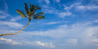 Palm tree against blue sky Stock Images