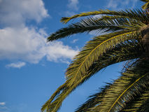 Palm tree. Against blue sky with few clouds Stock Photos