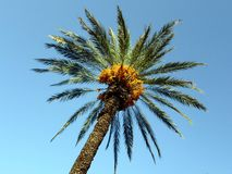 Palm tree against the blue sky royalty free stock photo