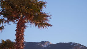 Palm tree against the blue sky illuminated by the rising sun.  stock video footage